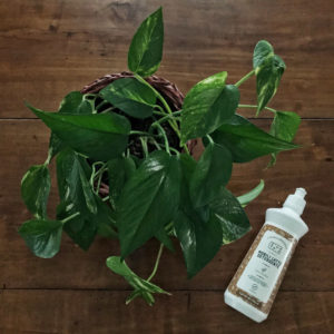 Come spolverare le piante